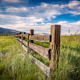 Old Fence by Lee Molof - Landscapes Prairies, Meadows & Fields