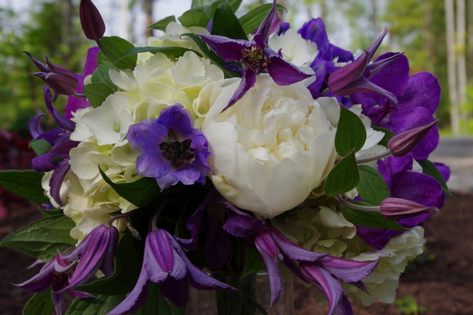 White hydrangea, purple