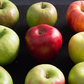 by Gale Martineau - Food & Drink Fruits & Vegetables ( apple washing, editorial, apple, orchard, rows )
