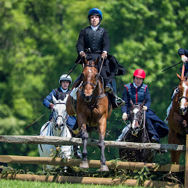 by Alan DiBerio - Sports & Fitness Other Sports ( steeple chase, side saddle )