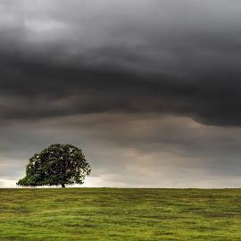 Cloud Tree by Pete Saunders - Landscapes Prairies, Meadows & Fields (  )