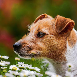 Spring is here 🌼🌼 by Tash Rogers - Animals - Dogs Portraits