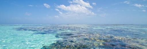 Belize Coral Reefs