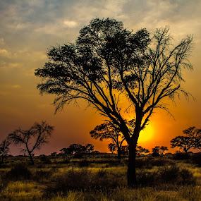 KALAHARI by Theuns de Bruin - Landscapes Sunsets & Sunrises ( kalahari )
