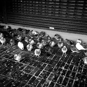 Oppression by Paul Baggarley - Animals Birds ( photography; amateur; art; political; android; blackandwhite )