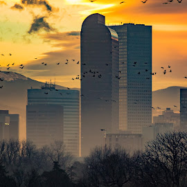 Geese at sunset-Denver, Colorado  by Noah Gallagher - City,  Street & Park  Skylines ( mountains, rocky, sunset, colorado, denver, rockies, geese, evening, birds, sun, goose,  )