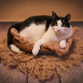 Strike a pose by Ewelina Barć - Animals - Cats Portraits