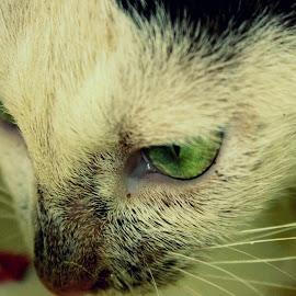 by Pragyan Sharma - Animals - Cats Kittens (  )