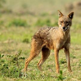 by Jayanta Pramanick - Animals Other Mammals