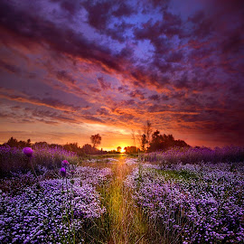 A Peaceful Proposition by Phil Koch - Landscapes Prairies, Meadows & Fields ( vertical, travel, yellow, sky, nature, weather, light, orange, colors, twilight, art, mood, journey, horizon, portrait, country, l  ove, dawn, environment, season, horiz  ons, serene, outdoors, lines, natural, hope, inspirational, wisconsin, ray, joy, landscape, spring, sun, photography, life, emotions, dramatic, horizons, inspired, clouds, office, park, heaven, beautiful, scenic, living, morning, field, unity, blue, sunset, amber, peace, meadow, beam, sunrise, earth )