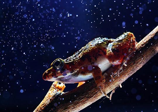 Frog+ macro photography