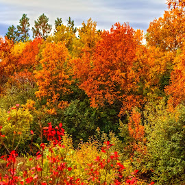 Autumn Time by Julie Wooden - Nature Up Close Trees & Bushes ( orange, north dakota, fall colors, hebron, green, outside my back door, yellow, landscape, red, nature, autumn, fall, trees, cloudy )