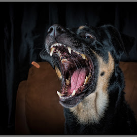 playing with treats  by Kevin Long - Animals - Dogs Playing ( treats, fur, dog, teeth, eye )