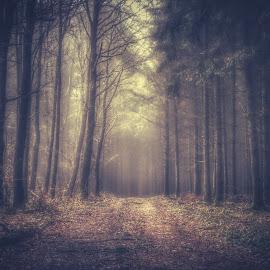 by Guy Krier - Landscapes Forests