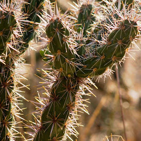 spines of light by Karl Jones - Nature Up Close Other plants