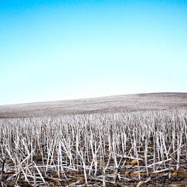 Valhallah by Jurgen van Staden - Novices Only Landscapes ( farm, field, hills, nature, white,  )