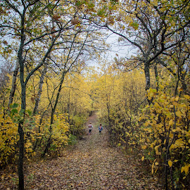 Fall by Laura Gardner - Novices Only Landscapes ( nd, outdoors, fall, trees, hiking )