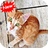 Free Download Cat 1 APK for Samsung