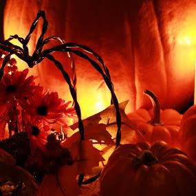 Warm Glow in October  by Emily Schmidt - Public Holidays Halloween ( orange, pumpkin, fall, pwcpumpkins, october, pumpkins, halloween,  )