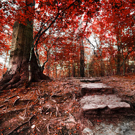 20180809_DSC_5997 by Zsolt Zsigmond - Landscapes Forests ( red, forest, nature, steps, landscape )