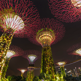 Gardens by the bay at night by Charliemagne Unggay - Buildings & Architecture Public & Historical