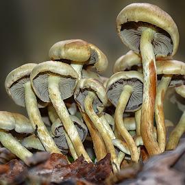 by Manuela Dedić - Nature Up Close Mushrooms & Fungi (  )
