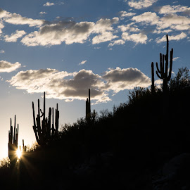 Catalina State Park by Gannon McGhee - Landscapes Deserts ( park, arizona, tucson, state, catalina )