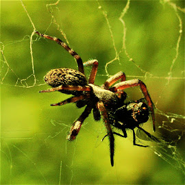 by Tim Bennett - Animals Insects & Spiders