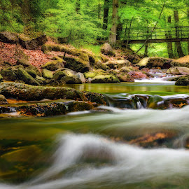 River Harz by Tim Lee - Nature Up Close Water ( harz, national park, green, natural, waterscape, nature, waterfall, tree, river, water, trees )
