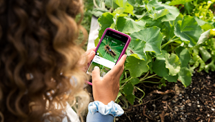 Girl looking up a plant name using Google Lens