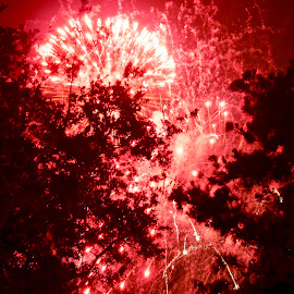 Fire Works in the sky by Patty Mo - Abstract Fire & Fireworks ( red, red in the sky, patty mo, patricia maureen photos, fireworks in the sky, above the trees, fireworks, 4th of july, red fireworks,  )