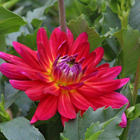 by Terry Linton - Flowers Single Flower (  )