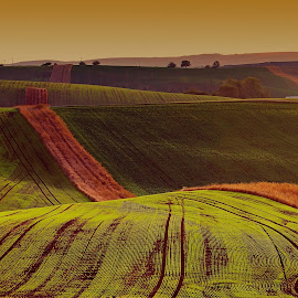 undulation by Josef Hasík - Landscapes Prairies, Meadows & Fields ( green, brown, stripes, landscape, undulation )