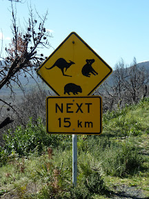 Attention, kangourous, koalas et wombats !
