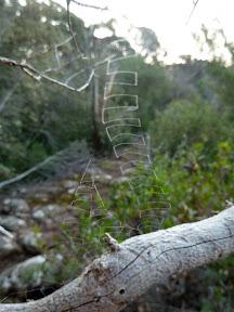 Curieuses toiles d'araignée