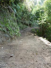Un sentier néo-zélandais