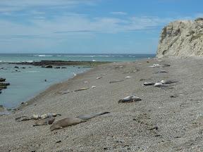 Punta Ninfas