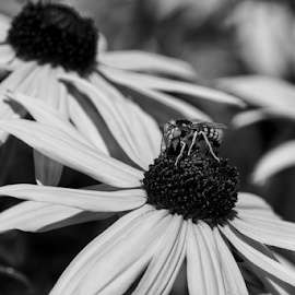 Visitor  by Todd Reynolds - Black & White Flowers & Plants