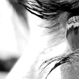 Eye Macro by Sandra Aguirre - Abstract Macro ( macro, black and white, eyelashes, view, eye )
