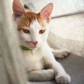 Casper by Aniket Datar - Animals - Cats Portraits (  )