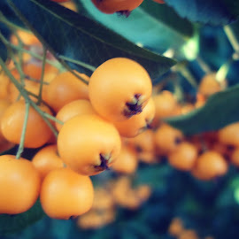 japanese fruits in europe by Luisa Androne - Nature Up Close Other plants ( fruit,  )