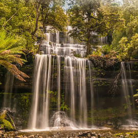 Russell Falls by Brent McKee - Landscapes Waterscapes ( water, fuji x, mt field national park, waterfall, rainforest, russell falls )