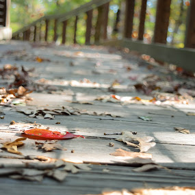 Boardwalk with Autumn Leaves by Gwyn Goodrow - City,  Street & Park  City Parks ( red, autumn, oak, fall, brown, walking trail, changing of the leaves, leaves, boardwalk )
