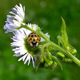 Flowers and insects by Claudiu Petrisor - Instagram & Mobile Other ( grass, green, insect, garden, beetle, flower )
