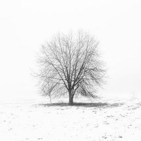 Uppsala by Issam Shaheen - Black & White Landscapes ( uppsala, uppsalastad, sverige, sweden, scandinavian, loves_sweden, photographer, photographers, photo, photos, photographey, photoshoot )