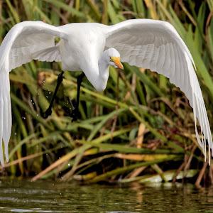 Bird 015_DxO Q.jpg