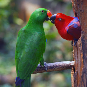 a couple by Anif Putramijaya - Animals Birds