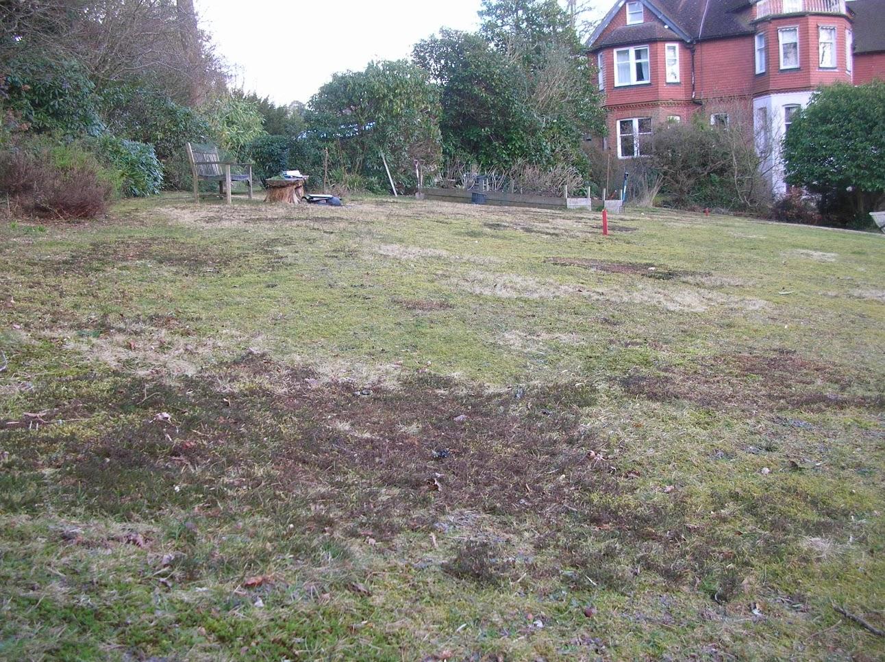 Photo 1 / 1 - Low-maintenance, Acid-heath Lawn