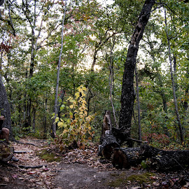 Pine Mountain 1 by Angela Hollowell - Novices Only Landscapes ( nature, state park, hikiing, trees, nature trail )