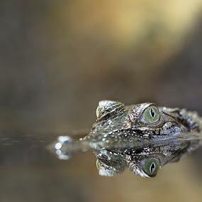 Baby croc in the mist by Sefanya Dirgagunarsa - Animals Reptiles